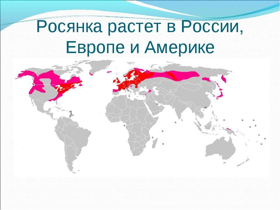 Росянка растет в России, Европе и Америке