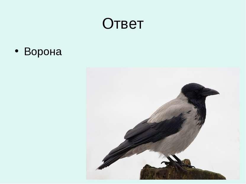 Ответ Ворона