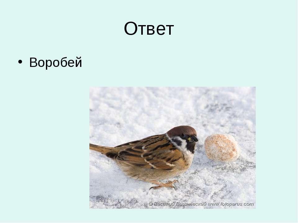 Ответ Воробей