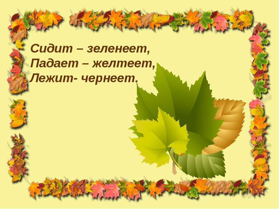 Сидит – зеленеет, Падает – желтеет, Лежит- чернеет.