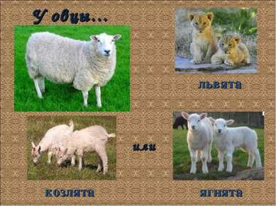 У овцы… ягнята козлята или львята