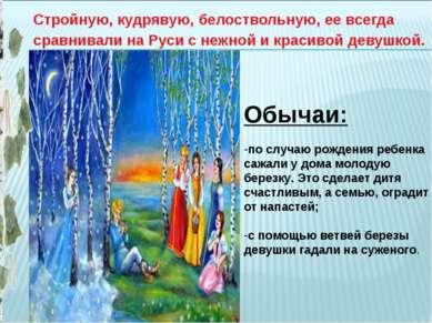 Стройную, кудрявую, белоствольную, ее всегда сравнивали на Руси с нежной и кр...