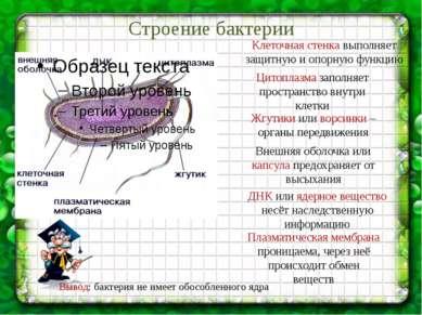 Строение бактерии Клеточная стенка выполняет защитную и опорную функцию Цитоп...