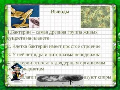 Выводы 1.Бактерии – самая древняя группа живых существ на планете 2. Клетка б...