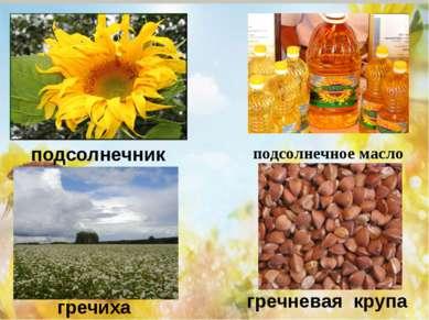 подсолнечник подсолнечное масло гречиха гречневая крупа