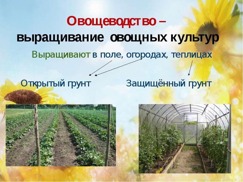 Овощеводство – выращивание овощных культур Выращивают в поле, огородах, тепли...