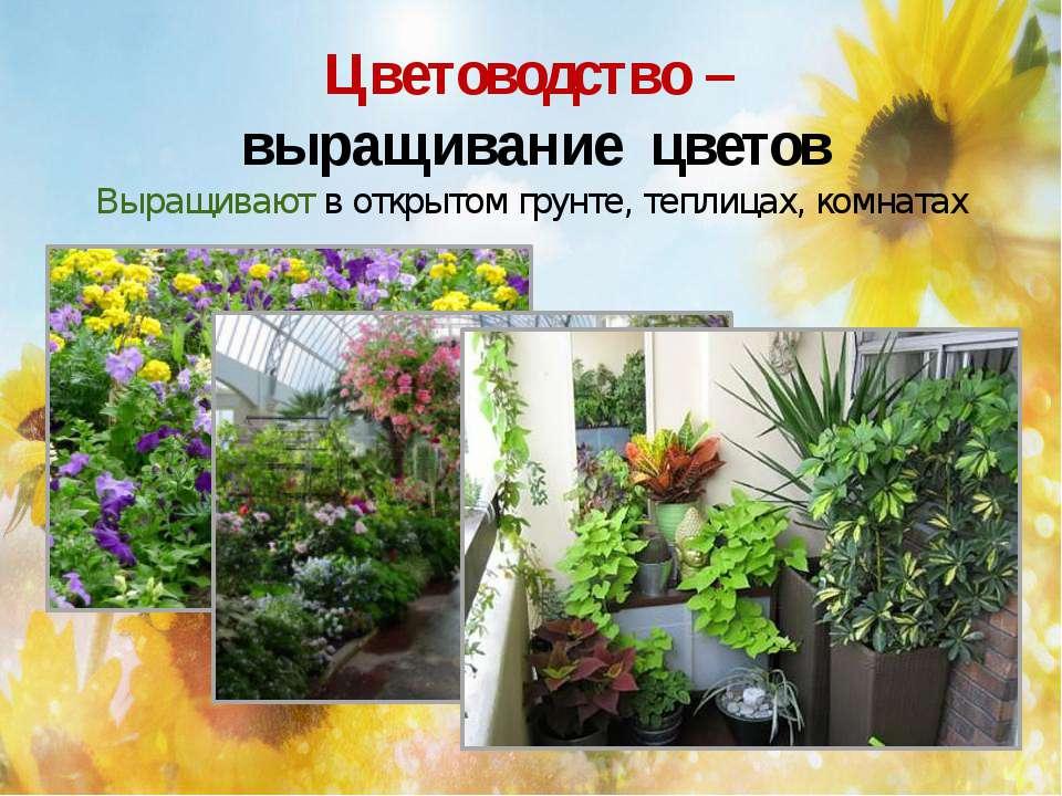 Цветоводство – выращивание цветов Выращивают в открытом грунте, теплицах, ком...