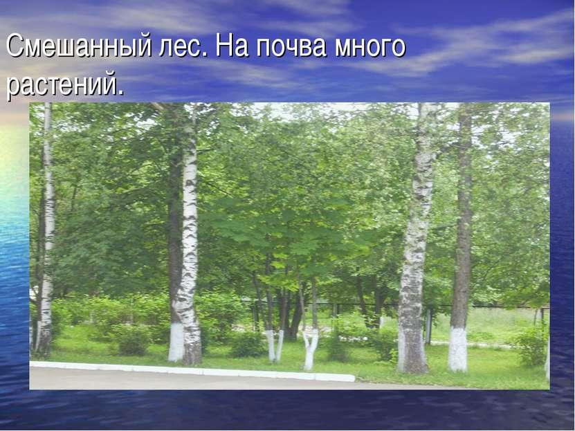 Смешанный лес. На почва много растений.