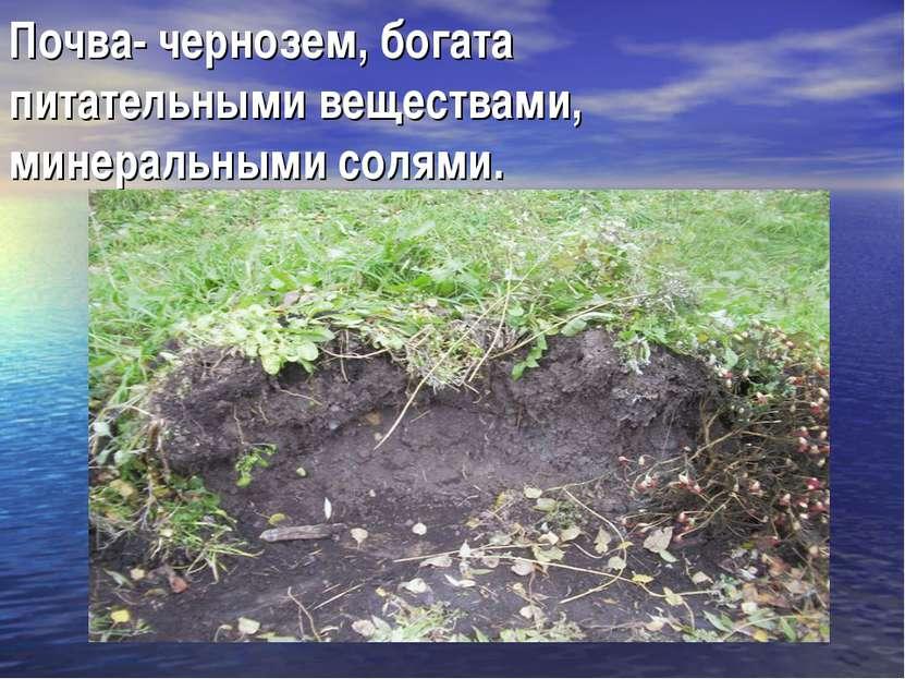 Почва- чернозем, богата питательными веществами, минеральными солями.
