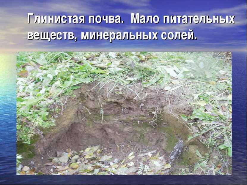 Глинистая почва. Мало питательных веществ, минеральных солей.