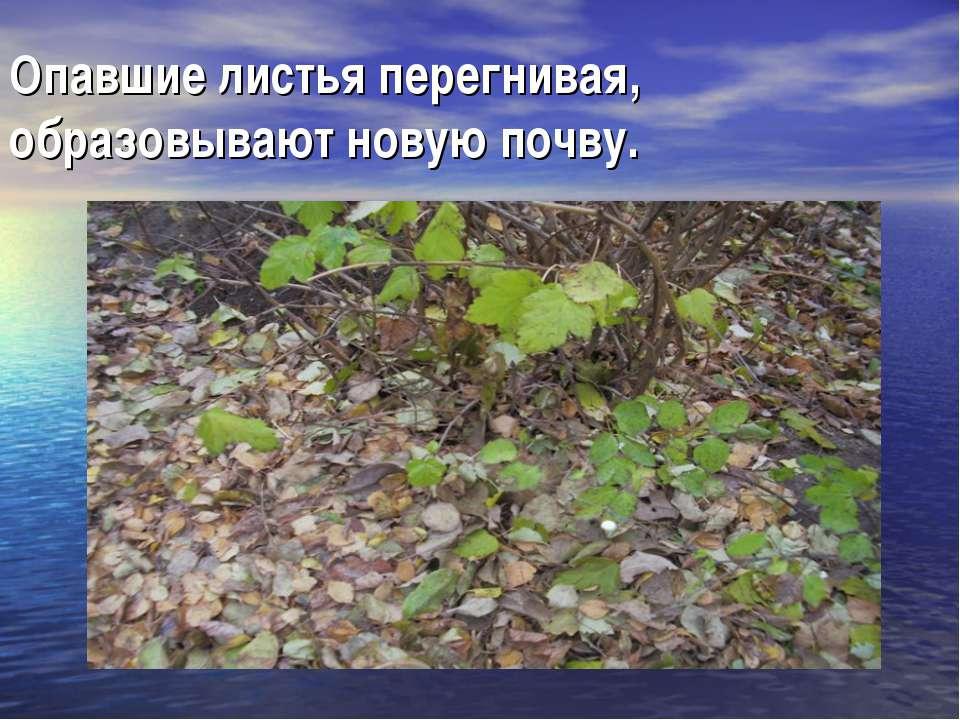 Опавшие листья перегнивая, образовывают новую почву.