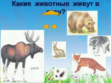 Какие животные живут в лесу?