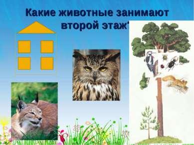 Какие животные занимают второй этаж?