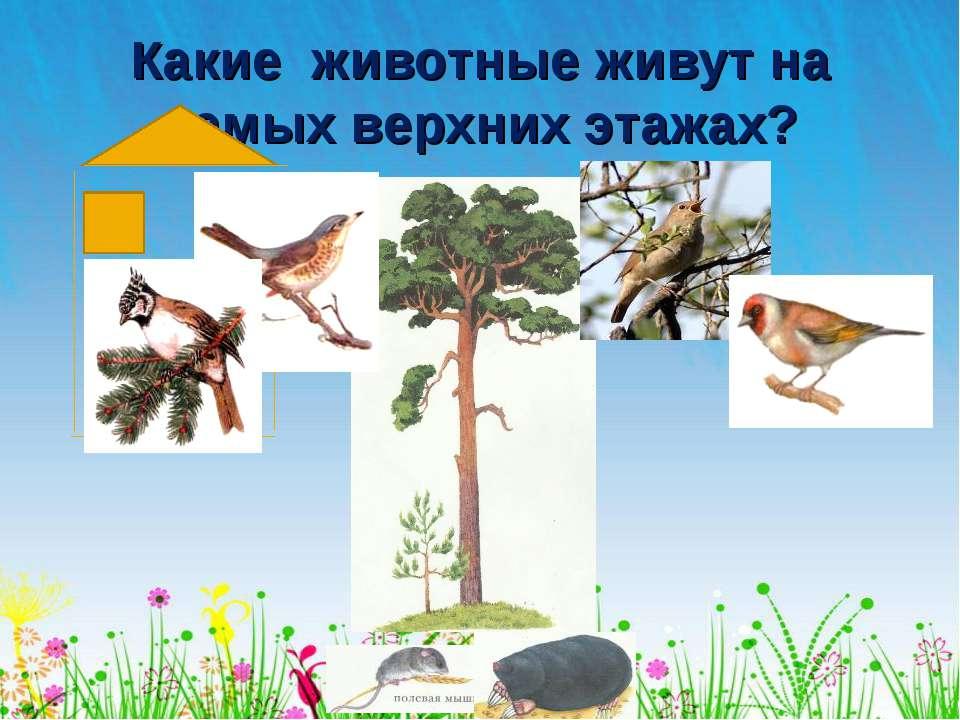 Какие животные живут на самых верхних этажах?