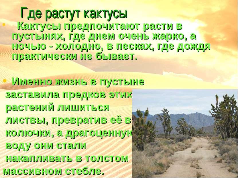 Где растут кактусы Кактусы предпочитают расти в пустынях, где днем очень жарк...