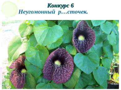 Конкурс 6 Неугомонный р…сточек.