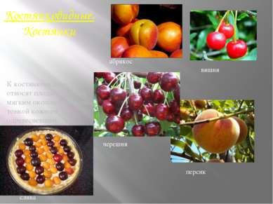 Костянковидные.Костянки К костянковидным относят плоды с сочным, мягким около...