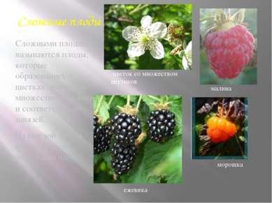 Сложные плоды Сложными плодами называются плоды, которые образовались в цветк...