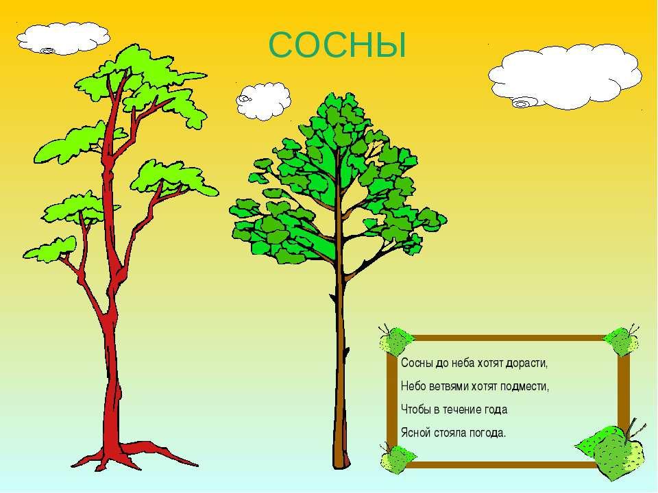 СОСНЫ Сосны до неба хотят дорасти, Небо ветвями хотят подмести, Чтобы в течен...