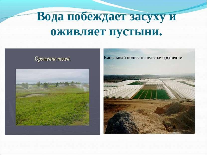 Вода побеждает засуху и оживляет пустыни. Капельный полив- капельное орошение