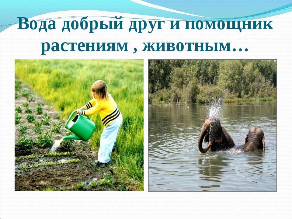 Вода добрый друг и помощник растениям , животным…