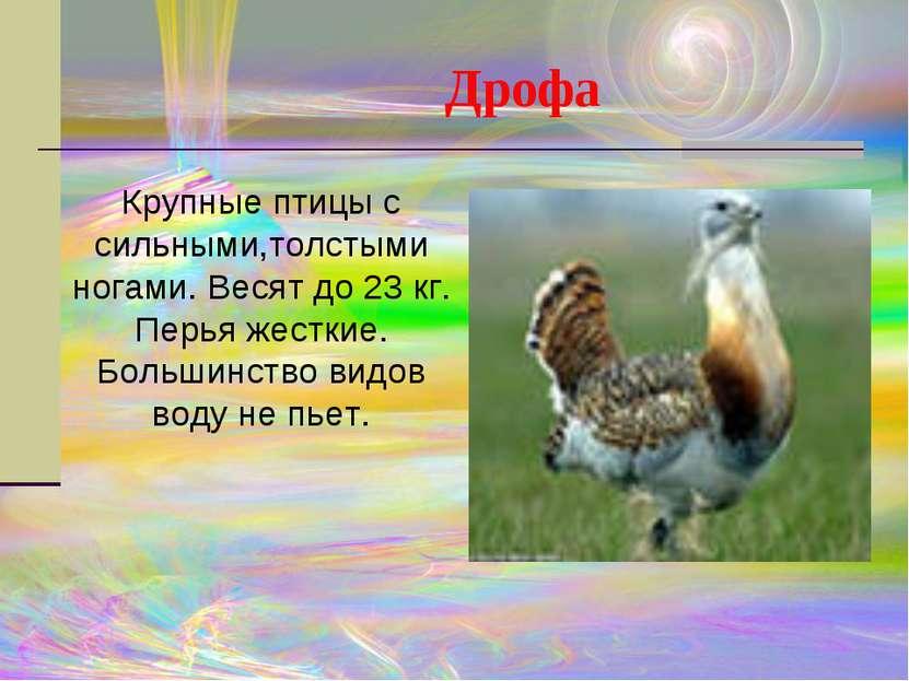 Крупные птицы с сильными,толстыми ногами. Весят до 23 кг. Перья жесткие. Боль...