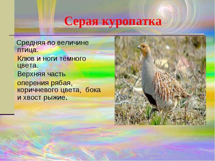 Серая куропатка Средняя по величине птица. Клюви ноги тёмного цвета. Верхня...