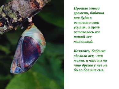 Прошло много времени, бабочка как будто оставила свои усилия, а щель оставала...