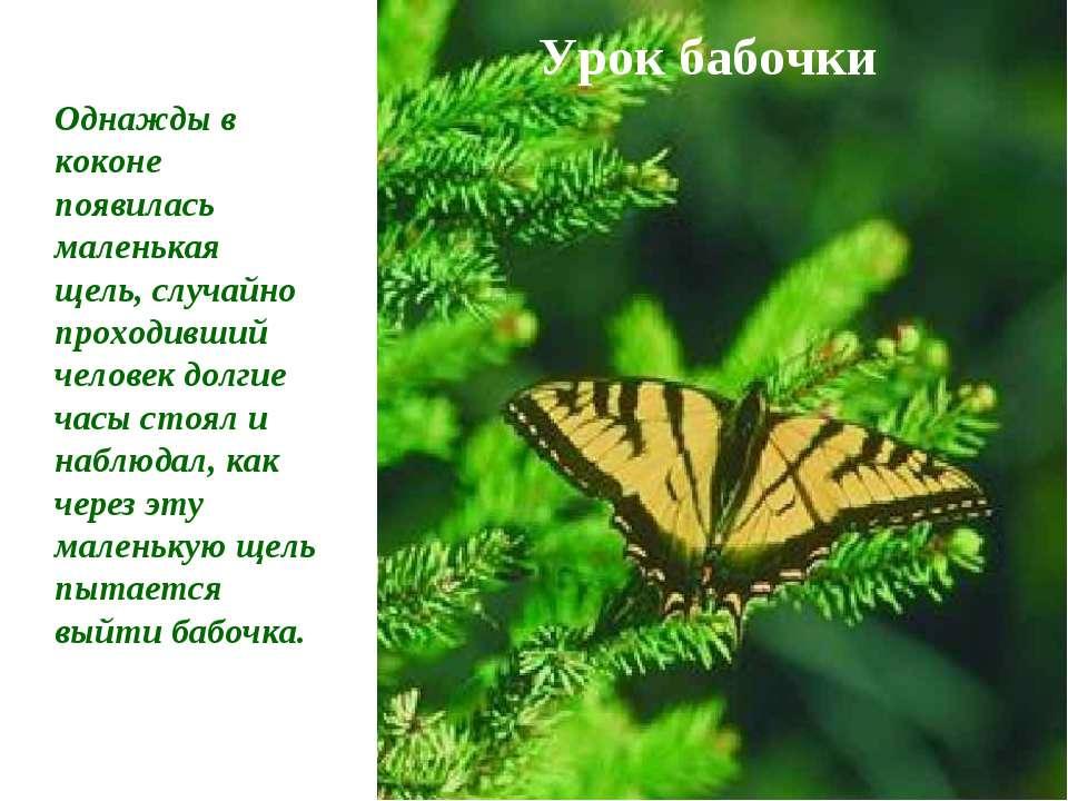 Урок бабочки Однажды в коконе появилась маленькая щель, случайно проходивший ...