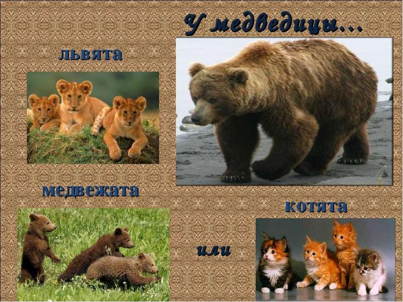 У медведицы… медвежата котята львята или