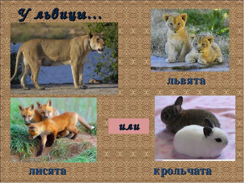 У львицы… лисята или львята крольчата