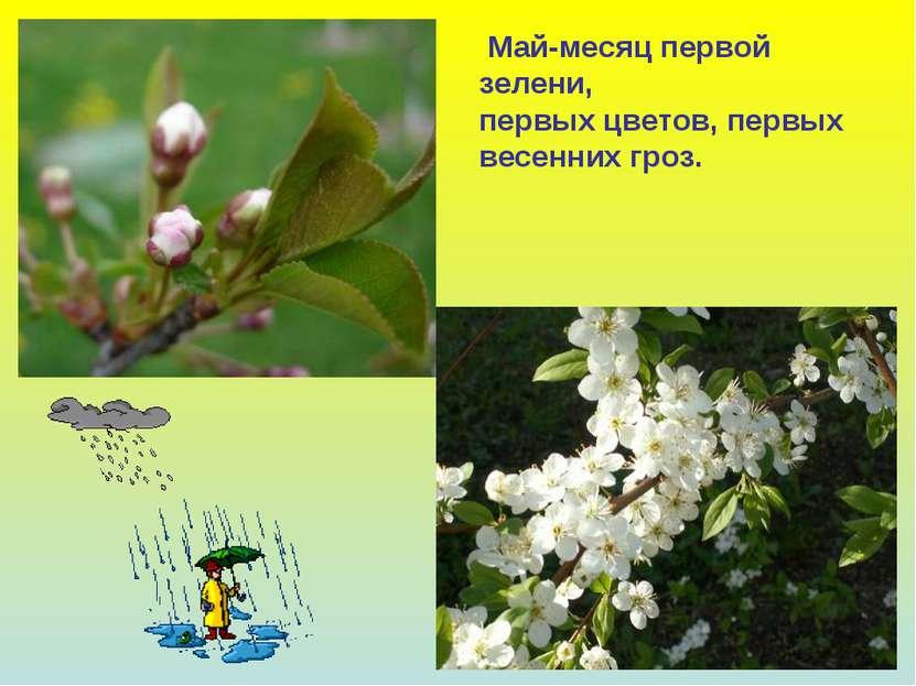 Май-месяц первой зелени, первых цветов, первых весенних гроз.