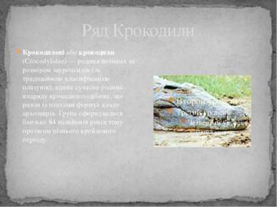 Ряд Крокодили Крокодилові або крокодили (Crocodylidae)— родина великих за ро...