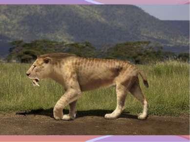 Их образ жизни Смилодоны в целом – любимцы зоологов. Об их образе жизни, особ...
