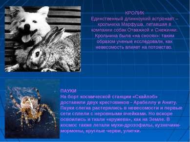 КРОЛИК Единственный длинноухий астронавт – крольчиха Марфуша, летавшая в комп...