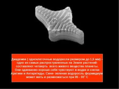 Диадемеи ( одноклеточные водоросли размером до 1,5 мм) – одно из самых распро...