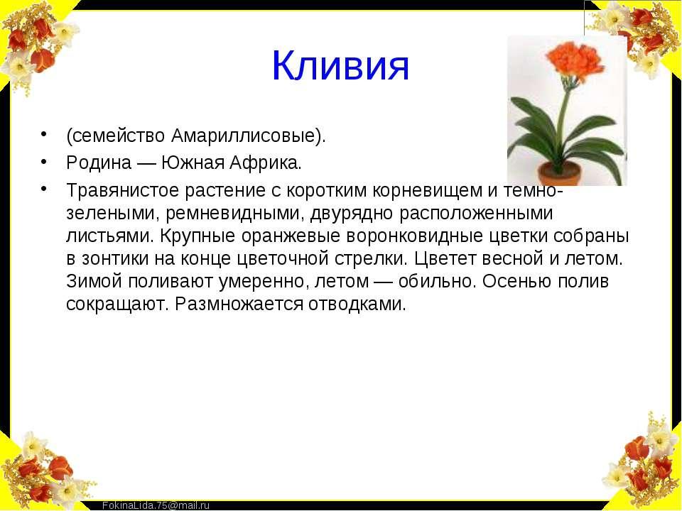 Кливия (семейство Амариллисовые). Родина — Южная Африка. Травянистое растение...
