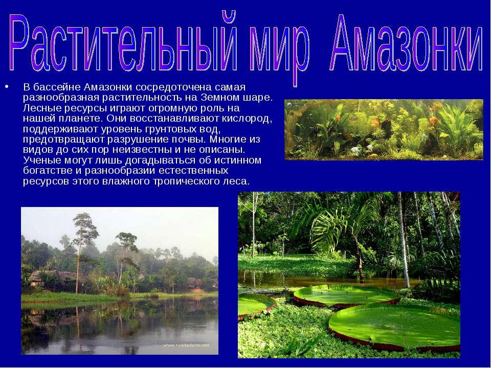 В бассейне Амазонки сосредоточена самая разнообразная растительность на Земно...