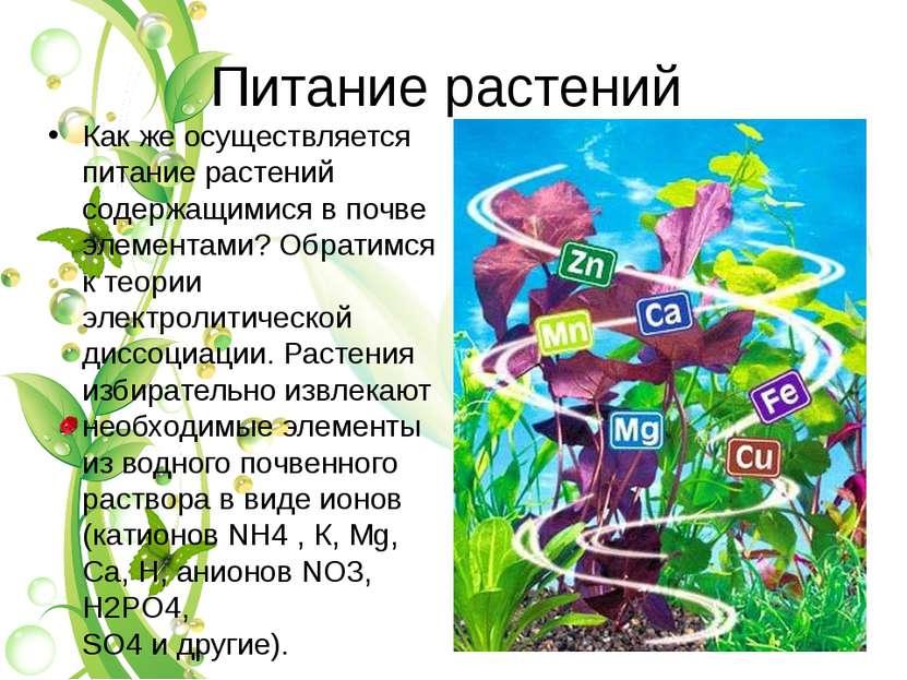 Питание растений Как же осуществляется питание растений содержащимися в почве...