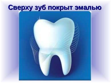 Сверху зуб покрыт эмалью
