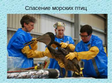 Спасение морских птиц
