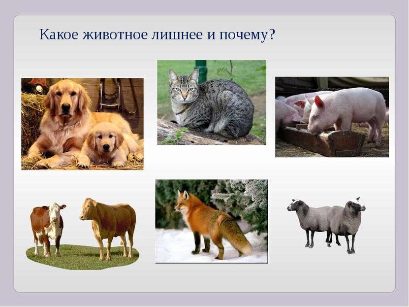 Какое животное лишнее и почему?