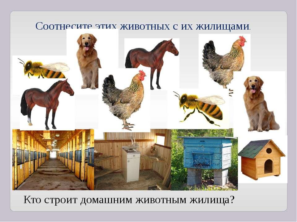 Соотнесите этих животных с их жилищами. Кто строит домашним животным жилища?