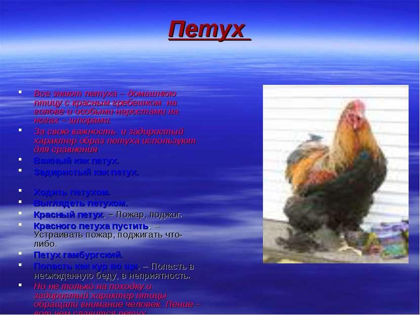 Петух Все знают петуха – домашнюю птицу с красным гребешком на голове и особы...