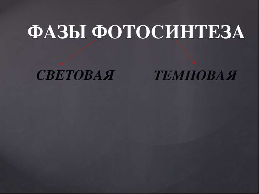 ФАЗЫ ФОТОСИНТЕЗА СВЕТОВАЯ ТЕМНОВАЯ