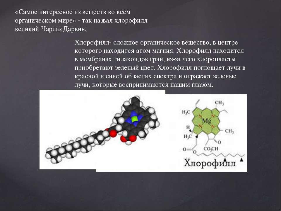 «Самое интересное из веществ во всём органическом мире» - так назвал хлорофил...