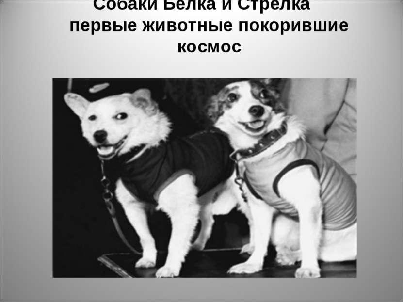 Собаки Белка и Стрелка первые животные покорившие космос