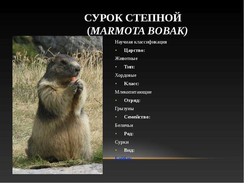 Научная классификация Царство: Животные Тип: Хордовые Класс: Млекопитающие От...