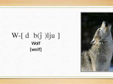 W-[ˈdʌb(ə)ljuː] Wolf [wʊlf]