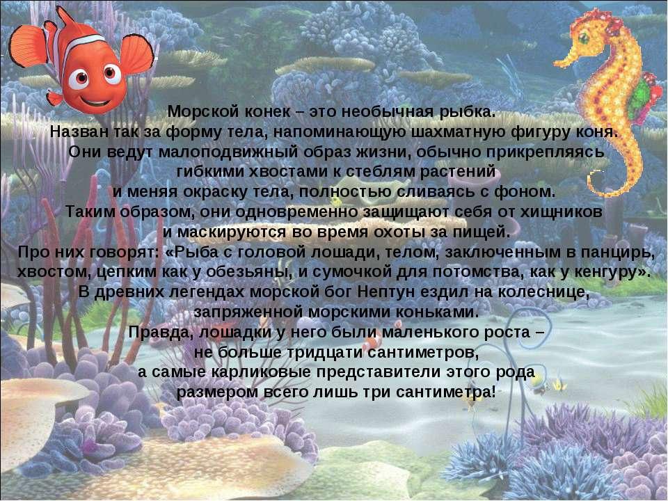 Морской конек – это необычная рыбка. Назван так за форму тела, напоминающую ш...